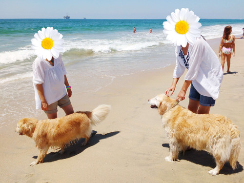 20160810_dog_beach_5