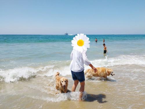 20160810_dog_beach_6